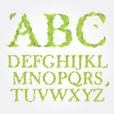 Floral green leaves ABC vector illustration Royalty Free Stock Photo