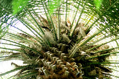 Floral green palm background Royalty Free Stock Image