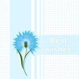 Floral greeting card best wishes with blue flower cornflower or centaurea cyanus. Polka dot background. Cartoon cornflower. Postcard Stock Photo
