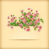 Floral greeting card pink cherry blossom flowers stock illustration