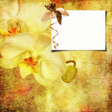Floral greeting card with place for your text. Royalty Free Stock Photography