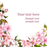 Floral greeting card. White, pink cherry sakura flowers. Watercolor Stock Photography