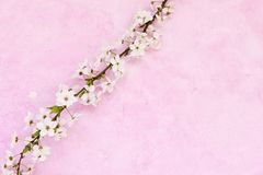floral grunge ανασκόπησης Στοκ φωτογραφία με δικαίωμα ελεύθερης χρήσης