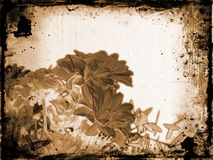 Floral grunge Royalty Free Stock Photography