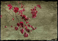 Floral Grunge Background Royalty Free Stock Images