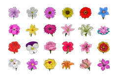 Floral Hand Drawn Colored Vector Icons 1 Royalty Free Stock Photo