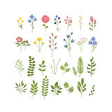 Floral Hand Drawn Herbarium Collection Royalty Free Stock Photo