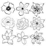 Floral handdrawing Stock Photos