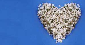 Floral heart on a blue background Royalty Free Stock Photography