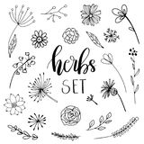 Floral and herbal set Royalty Free Stock Image