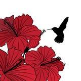 floral hibiscus ανασκόπησης κολίβριο απεικόνιση αποθεμάτων