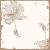 Floral hibiscus background Stock Photo