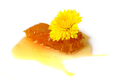 Floral honey in   in honeycomb and flowers Royalty Free Stock Photography