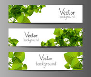Floral horizontal banners. Green horizontal banners with place for text Stock Photography