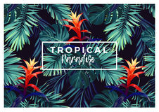 Floral horizontal postcard design with guzmania flowers, monstera and royal palm leaves. Exotic hawaiian vector Stock Images