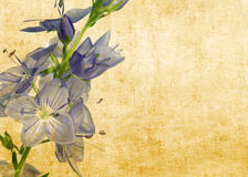 Floral illustration. And background with earthy texture. useful design element Stock Photo