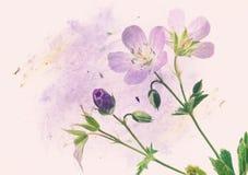 Floral illustration Stock Images