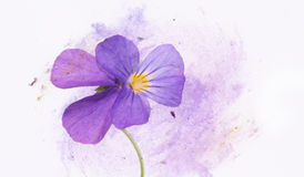 Floral illustration Stock Photo