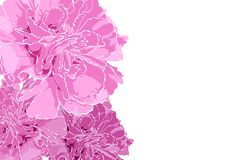 Floral illustration Royalty Free Stock Images