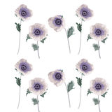 Floral illustration with anemone flowers, romantic print white Stock Photography