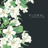 Floral illustration. Of apple tree blossom royalty free illustration