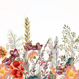 Floral illustration with field flowers. In vintage style Stock Photos
