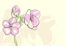 Floral illustration Stock Image