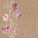 Floral illustration with flowers sweet pea and place for text on. Vector floral background with sweet peas and place for text. Vector illustration colored with Stock Image