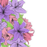 Floral illustration. Of lilly flowers Stock Photography
