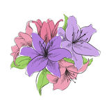 Floral illustration. Of lilly flowers Royalty Free Stock Image