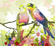 Floral illustration of a pair of budgies Royalty Free Stock Image
