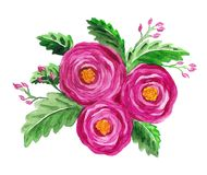Floral illustration with roses Stock Photo