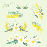 Floral illustrations set of spring mimosa flowers. Floral illustrations set of brunches and bouquets of mimosa and narcissus flowers Royalty Free Illustration