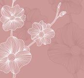 Floral invitation Stock Photos