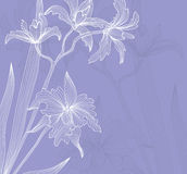 Floral invitation Royalty Free Stock Photography