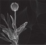 Floral invitation Stock Image