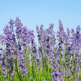 Floral Landscape Royalty Free Stock Images