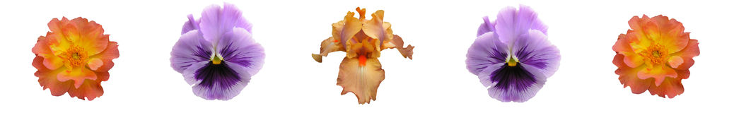 floral lavender κοραλλιών ράβδων στοκ εικόνα με δικαίωμα ελεύθερης χρήσης