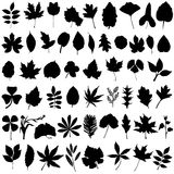 Floral and leaf vector Royalty Free Stock Image