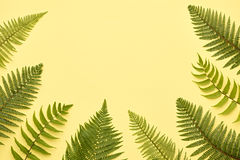 Floral Summer Fashion. Fern Tropical Leaf. Minimal. Floral Leaves Fashion Concept. Fern Tropical Leaf. Vivid Design. Art Gallery. Creative Bright Color Stock Images