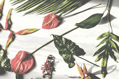 Floral leaves romance decoration freshness lush Stock Photos