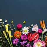 Floral leaves romance decoration freshness lush Stock Images