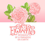 Floral lettering. The phrase Flowers remains of a paradise on earth. Ink hand lettering on a background with the image of a pink roses flowers. Vector floral Stock Images