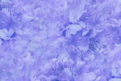 Floral  light blue beautiful background. Wallpapers of flowers blue-white  peony. Flower composition. Close-up. Stock Photo