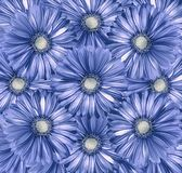 Floral  light blue-white  background. A bouquet of flowers from  light blue gerberas.  Close-up. Nature Stock Images