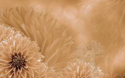 Floral light orange beautiful background of dahlias.  Flower composition  with an angel. Nature Stock Images