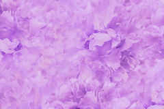 Floral  light pink beautiful background. Wallpapers of flowers pink-white  peony. Flower composition. Close-up. Stock Photography
