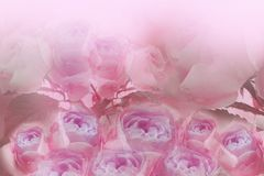 Floral light pink-purple background of roses. A bouquet of fresh light pink roses after the rain. Close-up. royalty free illustration
