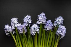 Floral Linear Composition Of Blue Flowers Of Hyacinths. Creative Top View Lay Flat With Copy Space On Dark Background. Greeting Or