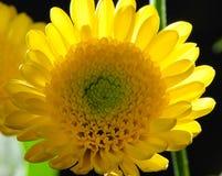 Floral Macro Arrangement Stock Photography